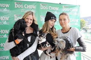 Perrotón Dog Chow 2013